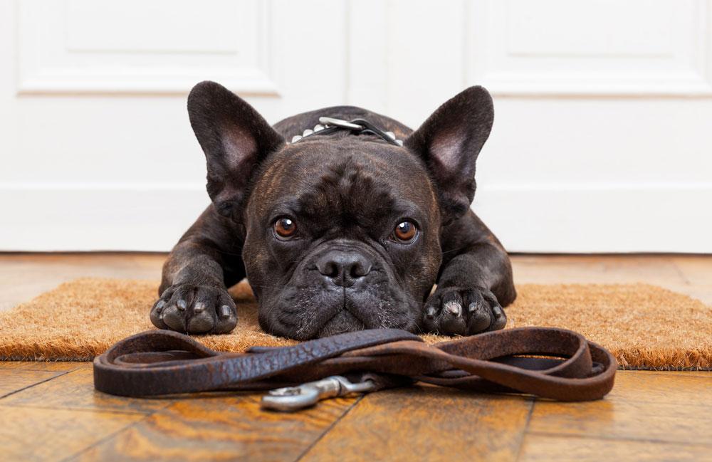 Dog Walking Qualifications